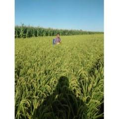 2018秋季农家大米 新米 20斤 50斤装
